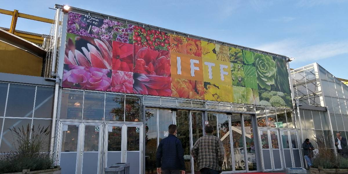 IFTF,dutch,flower,auction